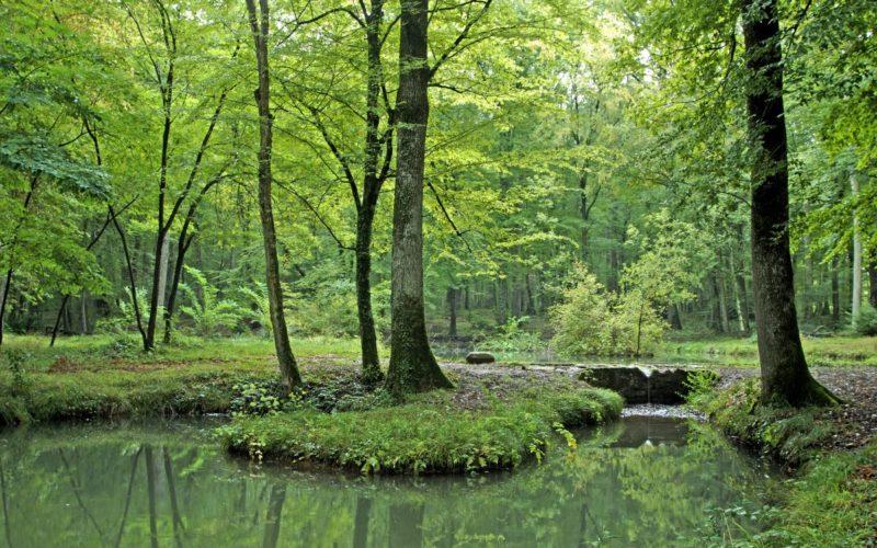 Forêt des Bertranges, Fontaine