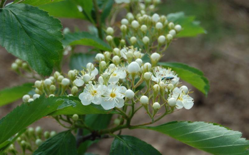 Arboretum-Adeline-Credit-M-et-Mme-Adeline-12jpg##Arboretum Adeline - Crédit M et Mme Adeline (12)##Adeline Claudie##