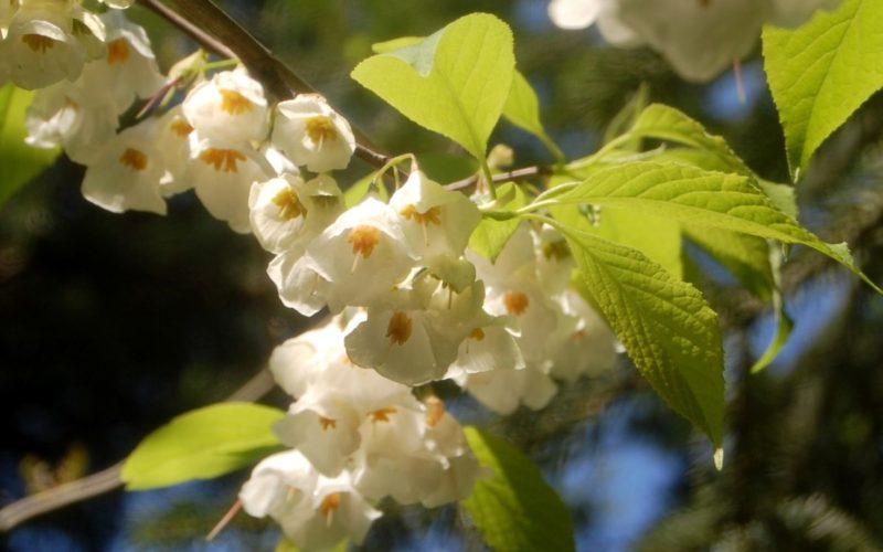 Arboretum-Adeline-Credit-M-et-Mme-Adeline-18jpg##Arboretum Adeline - Crédit M et Mme Adeline (18)##Adeline Claudie##