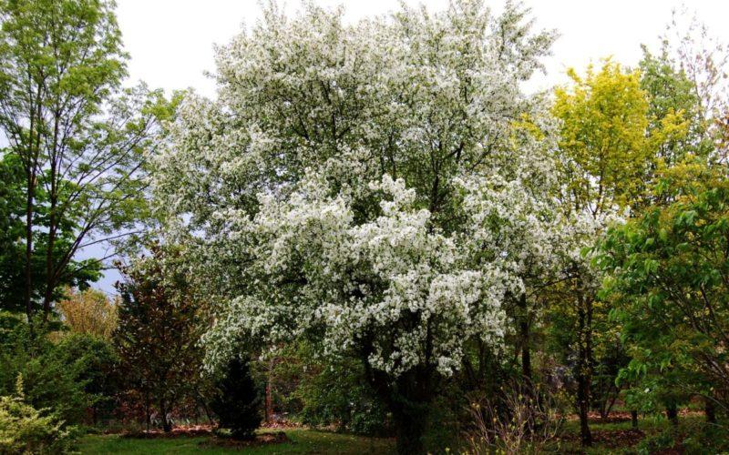 Arboretum-Adeline-Credit-M-et-Mme-Adeline-28jpg##Arboretum Adeline - Crédit M et Mme Adeline (28)##Adeline Claudie##