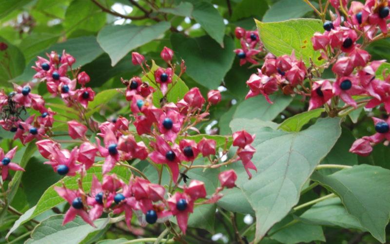 Arboretum-Adeline-Credit-M-et-Mme-Adeline-7jpg##Arboretum Adeline - Crédit M et Mme Adeline (7)##Adeline Claudie##