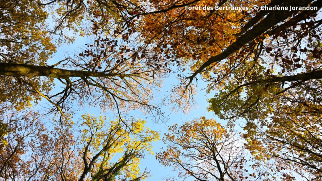 L'automne c'est en Bourgogne