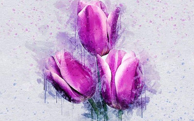 flowers-2715804-340jpgflowers-2715804-340pixabaycom##