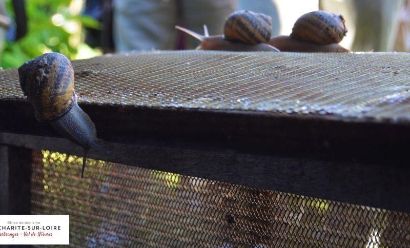 DSC-0064-2jpg##L'escargot sur Loire##ot la Charité##