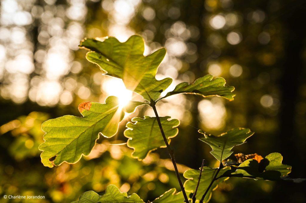 spots photos automne bertranges