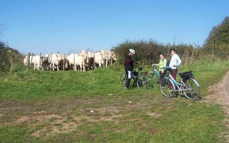 Photos-veloroute-012jpg##Randonnées cyclos en Pays Charitois ##ADT 58##
