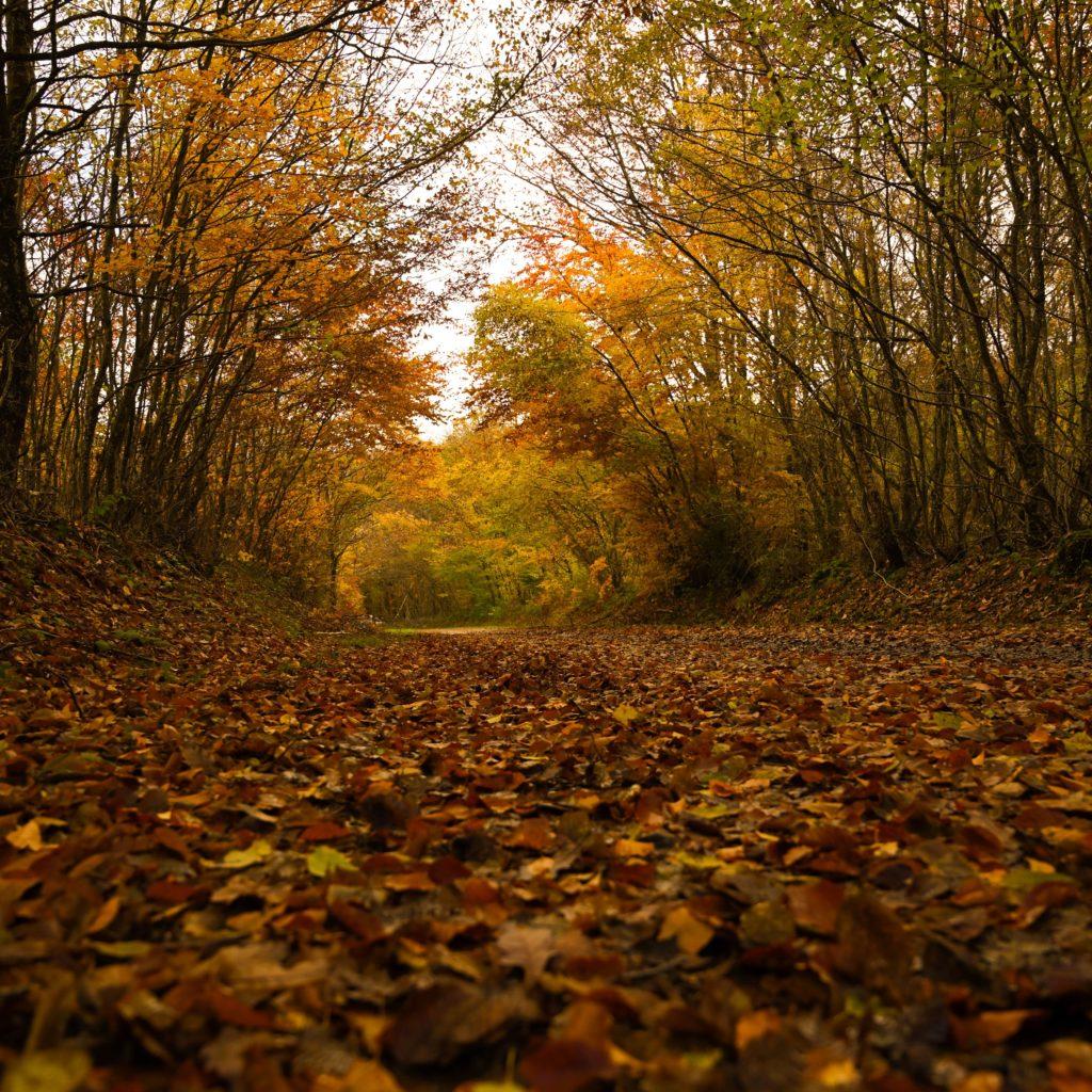 L'automne, c'est en balade