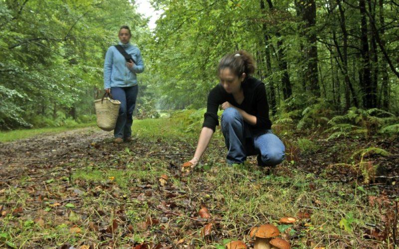 Forêt des Bertranges, champignons.