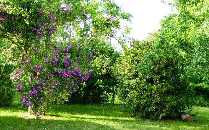 P1000105JPG##Le jardin##amat##
