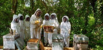 COurs-apicole-adulte-2jpg##COurs apicole adulte##Abeilles et Découvertes ##