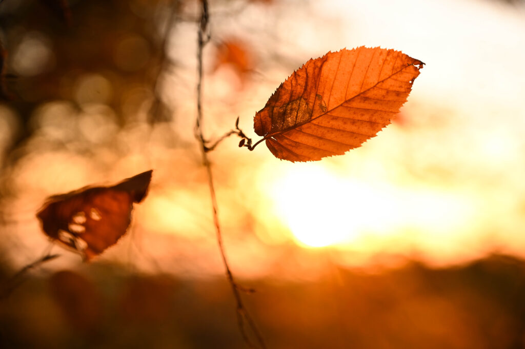 L'automne en Bourgognee